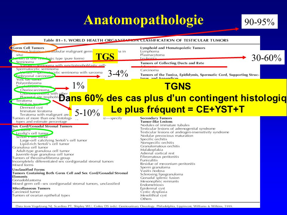 Anatomopathologie 90-95% TGS 30-60% 3-4% 1% TGNS