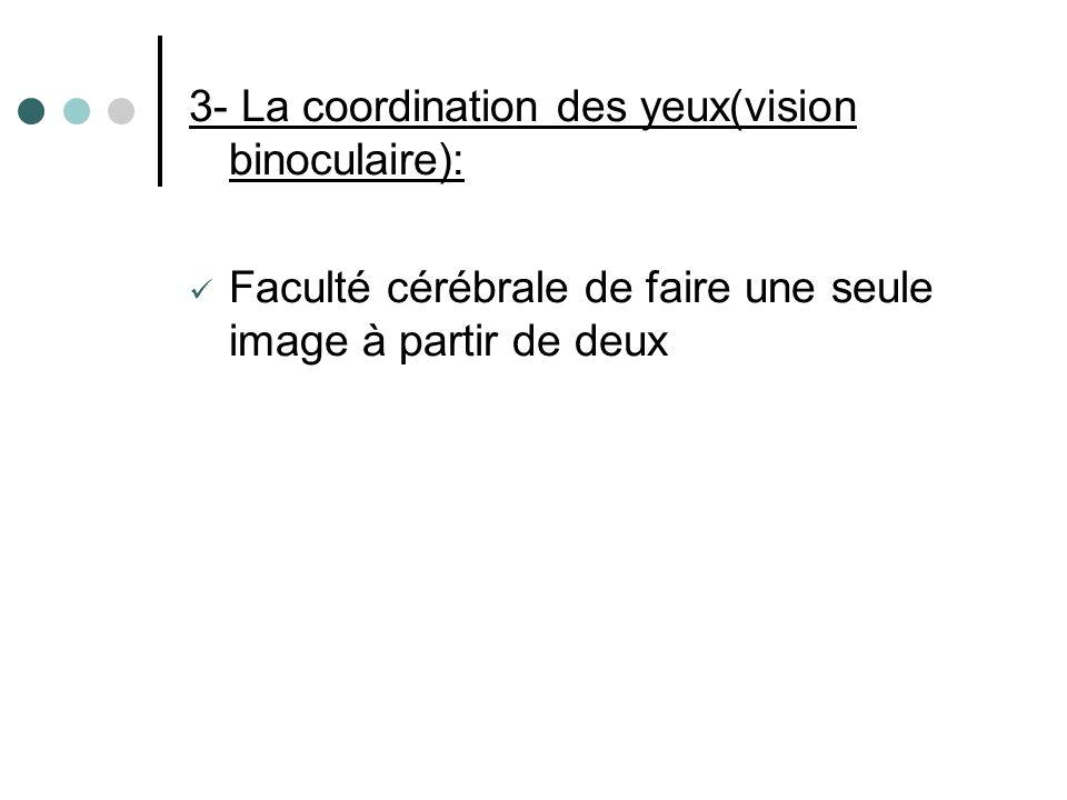 3- La coordination des yeux(vision binoculaire):