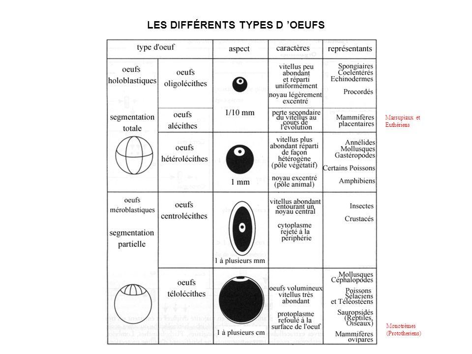 LES DIFFÉRENTS TYPES D 'OEUFS