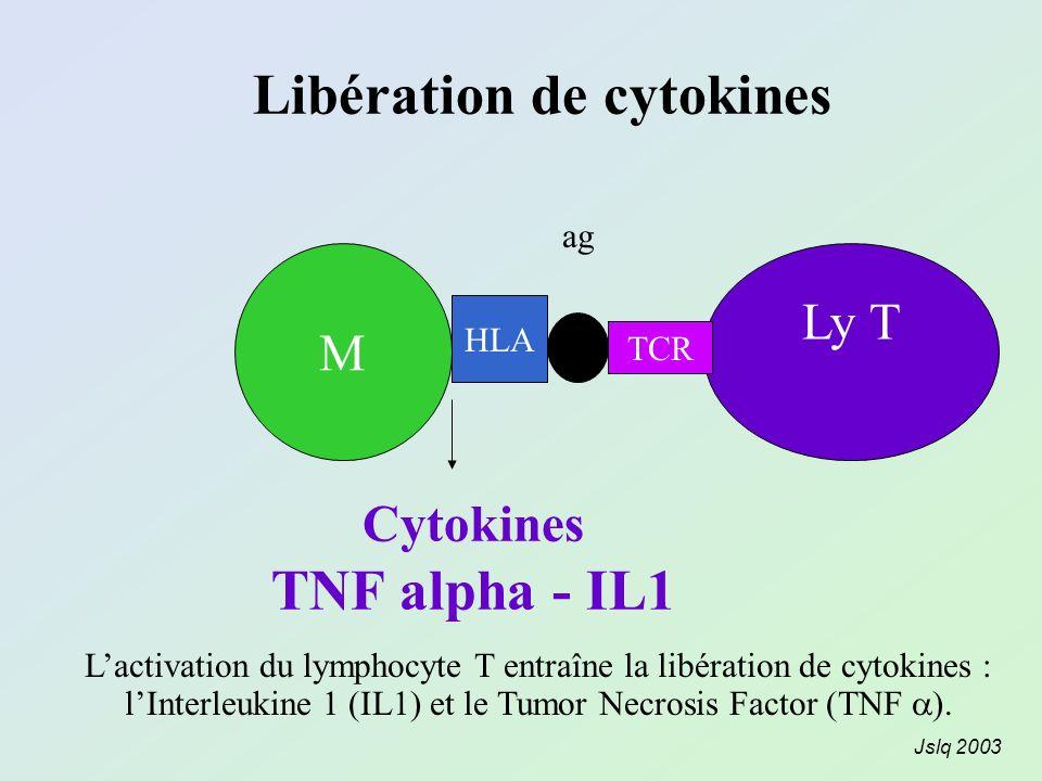 Libération de cytokines