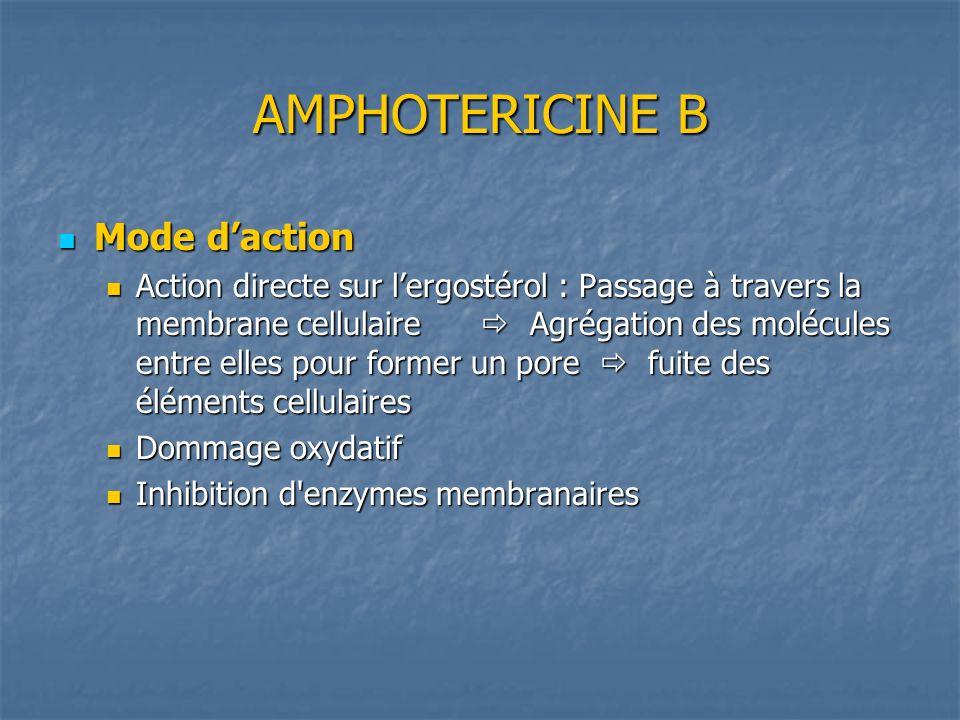 AMPHOTERICINE B Mode d'action