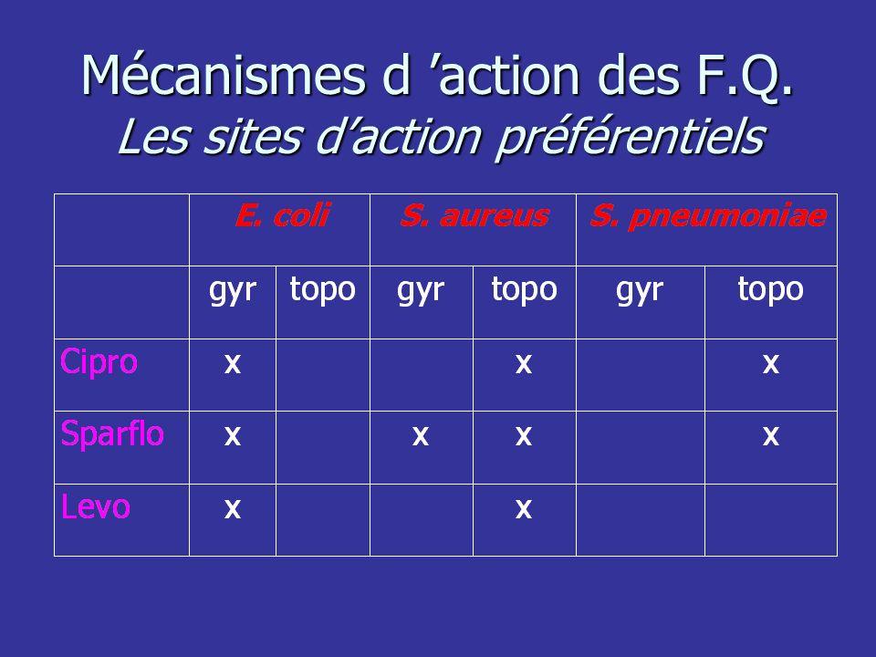 Mécanismes d 'action des F.Q. Les sites d'action préférentiels