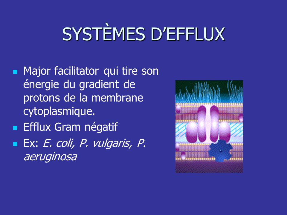 SYSTÈMES D'EFFLUX Major facilitator qui tire son énergie du gradient de protons de la membrane cytoplasmique.