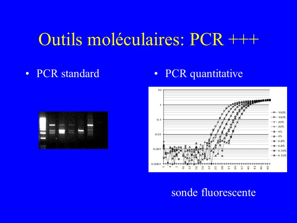 Outils moléculaires: PCR +++