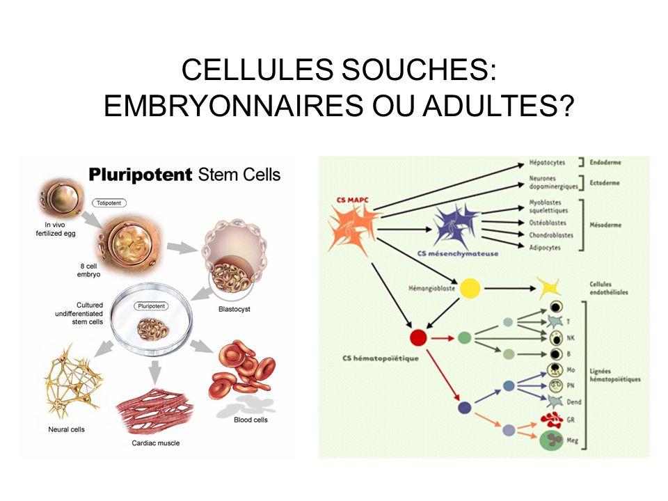 CELLULES SOUCHES: EMBRYONNAIRES OU ADULTES