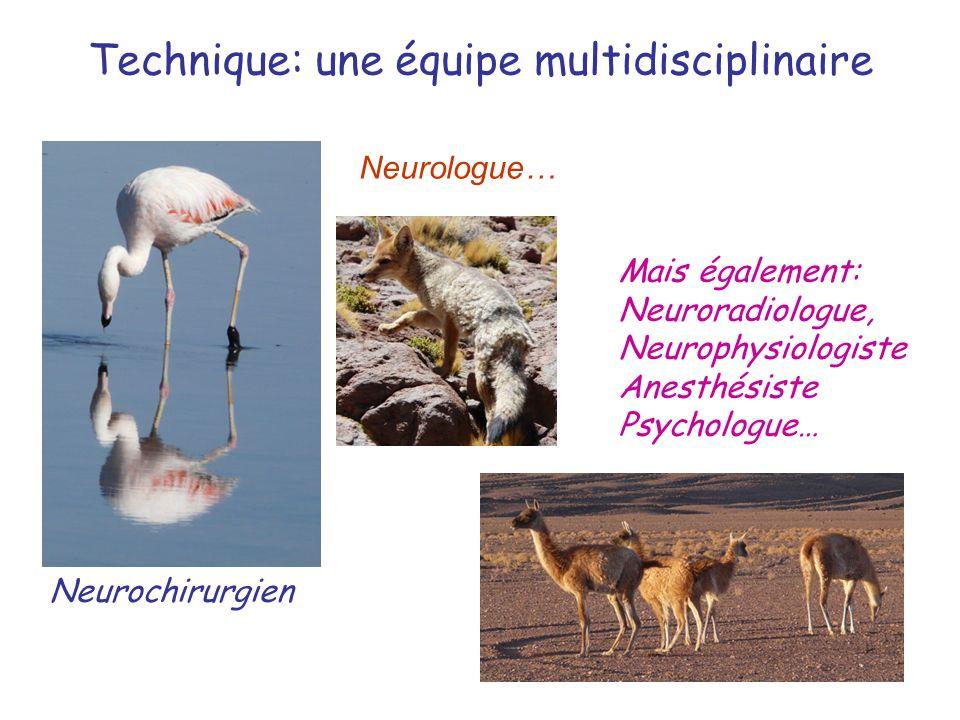 Technique: une équipe multidisciplinaire