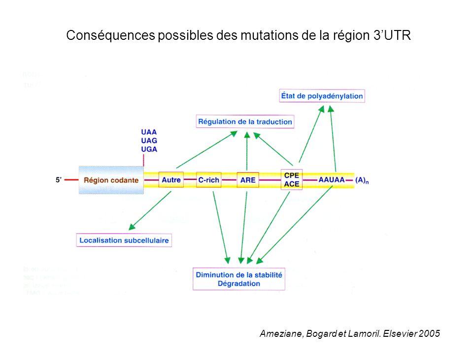 Conséquences possibles des mutations de la région 3'UTR