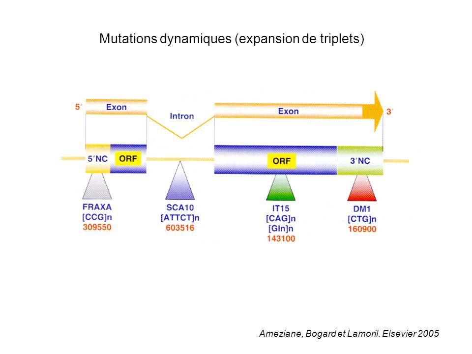 Mutations dynamiques (expansion de triplets)