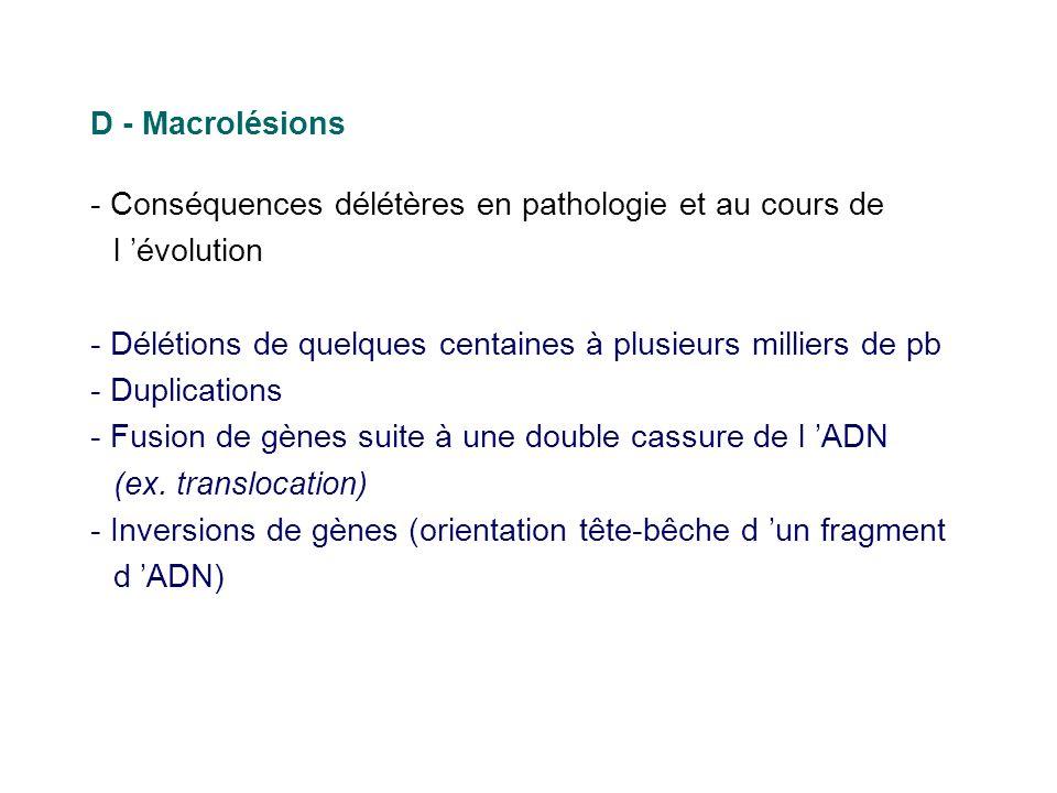 D - Macrolésions - Conséquences délétères en pathologie et au cours de l 'évolution. - Délétions de quelques centaines à plusieurs milliers de pb.