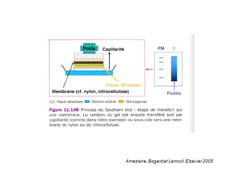 Ameziane, Bogard et Lamoril. Elsevier 2005