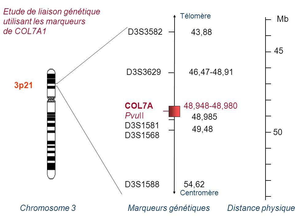 Etude de liaison génétique utilisant les marqueurs de COL7A1