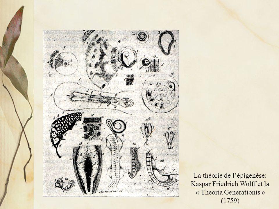 La théorie de l'épigenèse: Kaspar Friedrich Wolff et la « Theoria Generationis » (1759)