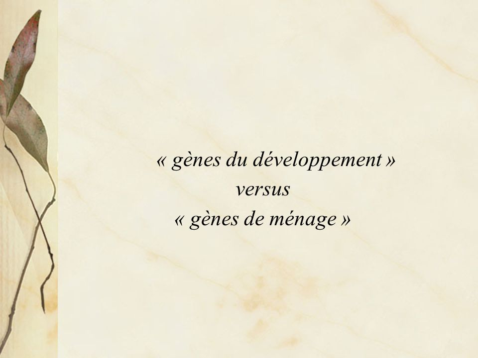 « gènes du développement »