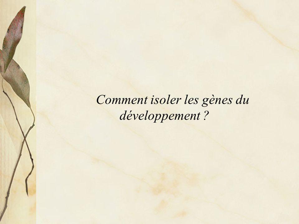 Comment isoler les gènes du développement