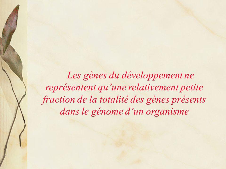 Les gènes du développement ne représentent qu'une relativement petite fraction de la totalité des gènes présents dans le génome d'un organisme