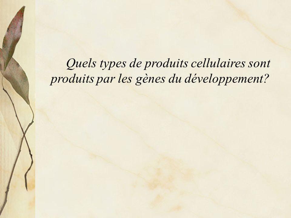 Quels types de produits cellulaires sont produits par les gènes du développement