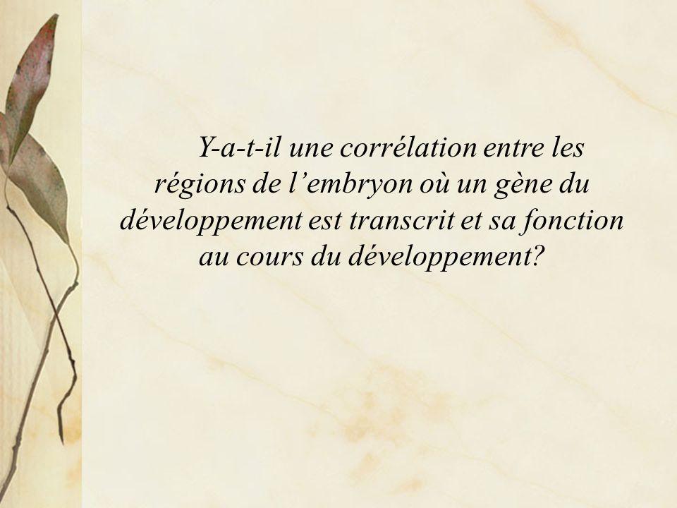 Y-a-t-il une corrélation entre les régions de l'embryon où un gène du développement est transcrit et sa fonction au cours du développement