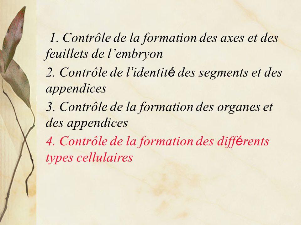 1. Contrôle de la formation des axes et des feuillets de l'embryon
