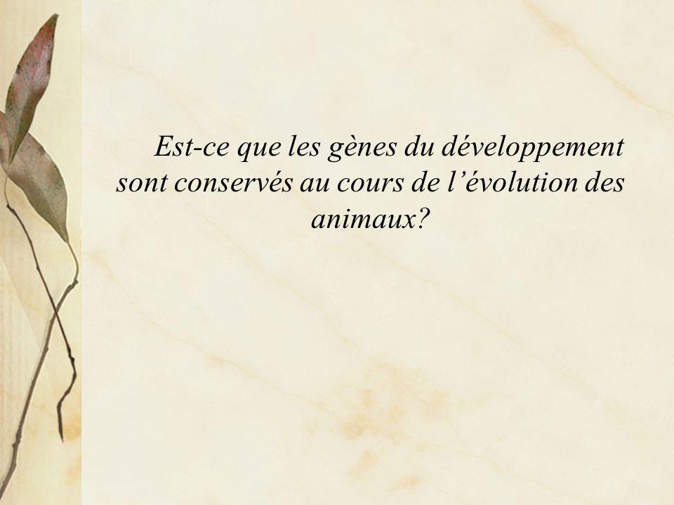 Est-ce que les gènes du développement sont conservés au cours de l'évolution des animaux