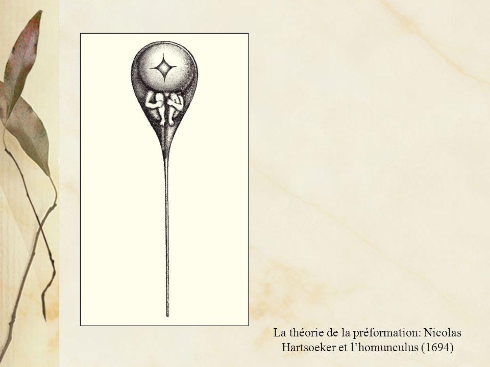 La théorie de la préformation: Nicolas Hartsoeker et l'homunculus (1694)