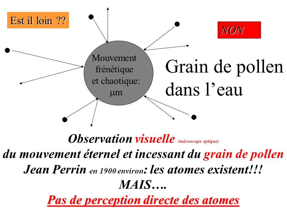 Grain de pollen dans l'eau Observation visuelle (microscope optique)