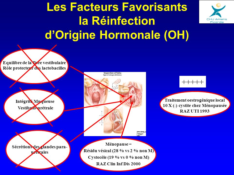 Les Facteurs Favorisants la Réinfection d'Origine Hormonale (OH)