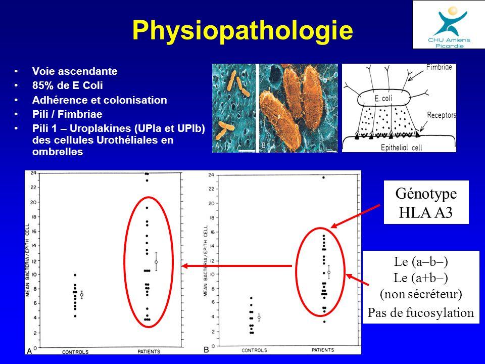 Physiopathologie Génotype HLA A3 Le (a–b–) Le (a+b–) (non sécréteur)