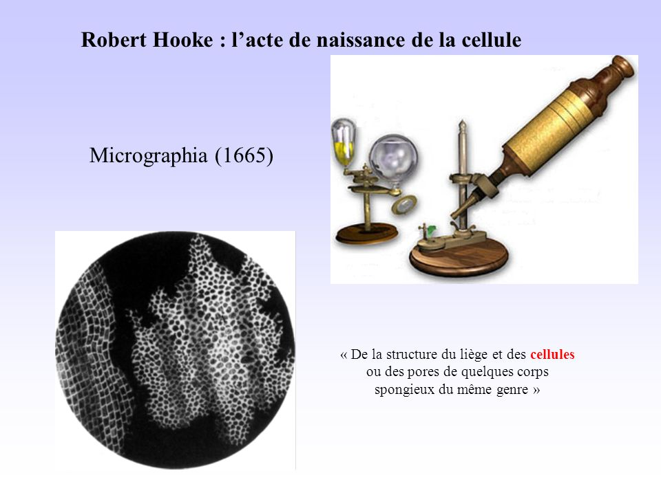 Robert Hooke : l'acte de naissance de la cellule