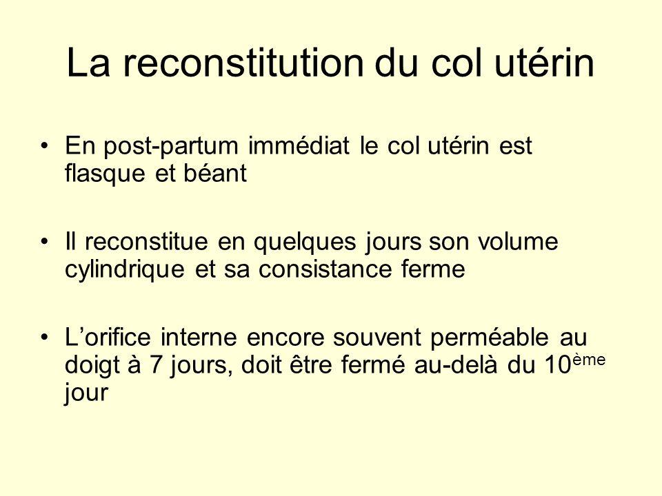La reconstitution du col utérin