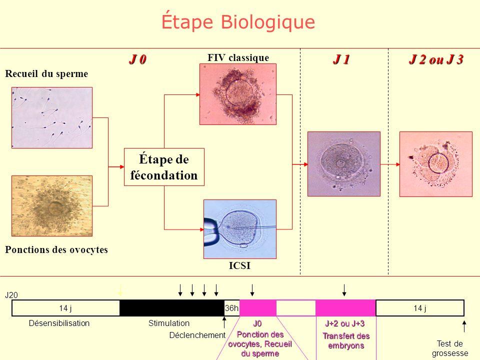 Étape Biologique J 0 J 1 J 2 ou J 3 Étape de fécondation FIV classique