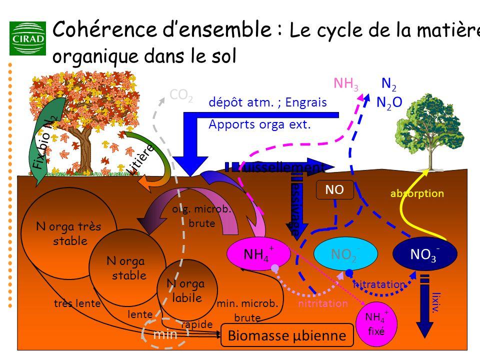 Cohérence d'ensemble : Le cycle de la matière organique dans le sol