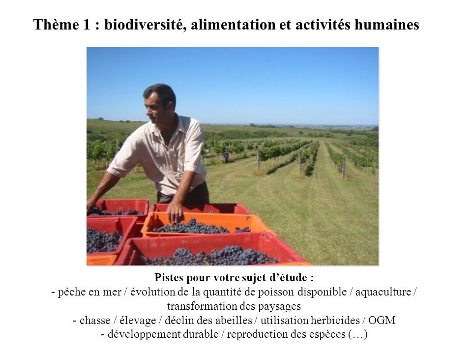 Thème 1 : biodiversité, alimentation et activités humaines