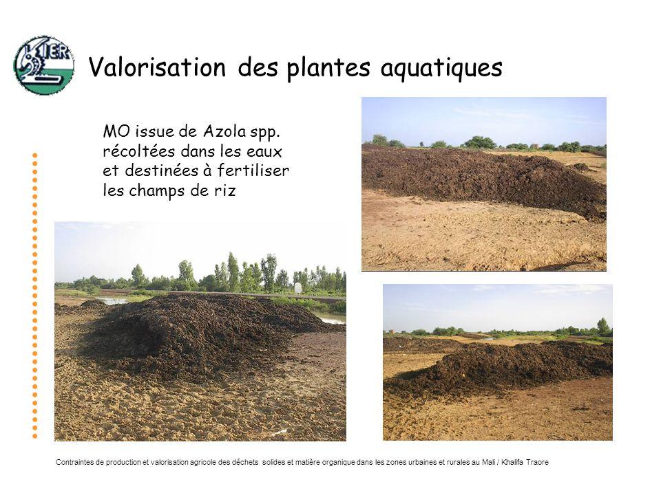 Valorisation des plantes aquatiques