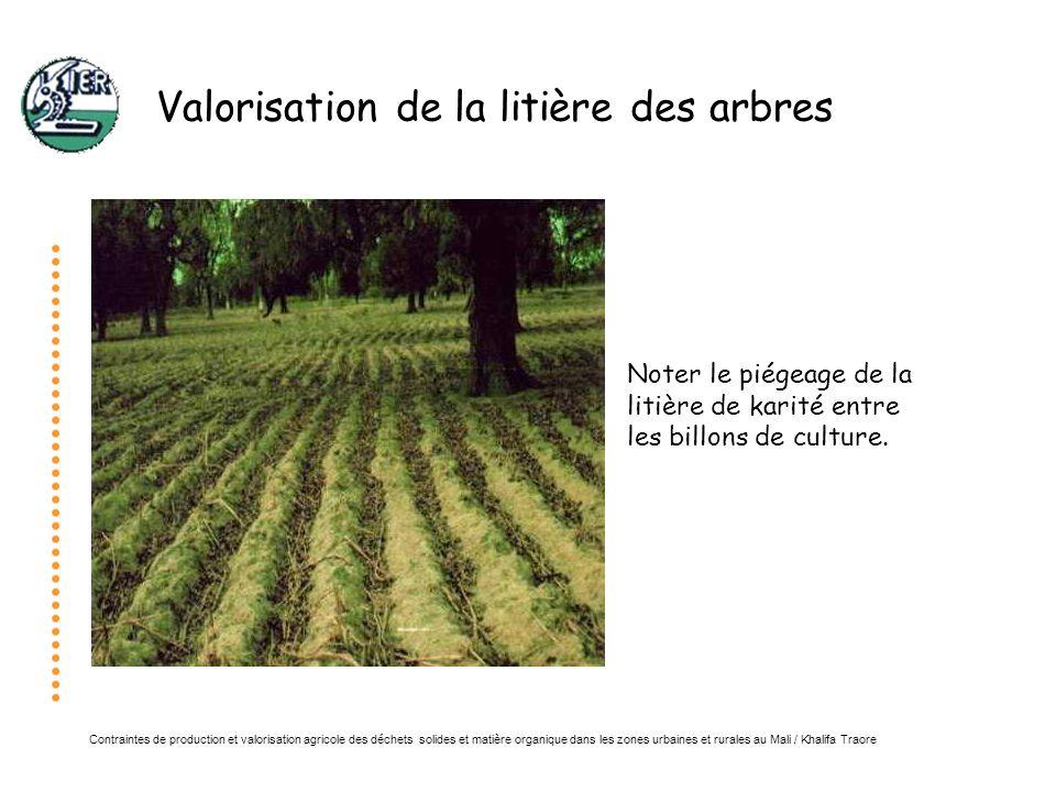 Valorisation de la litière des arbres