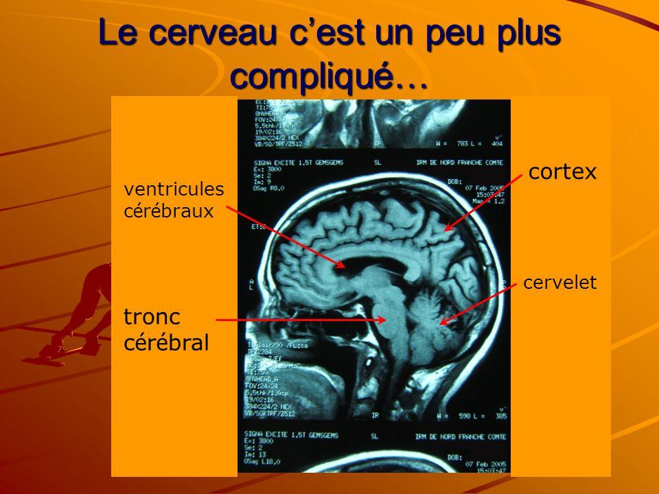 Le cerveau c'est un peu plus compliqué…
