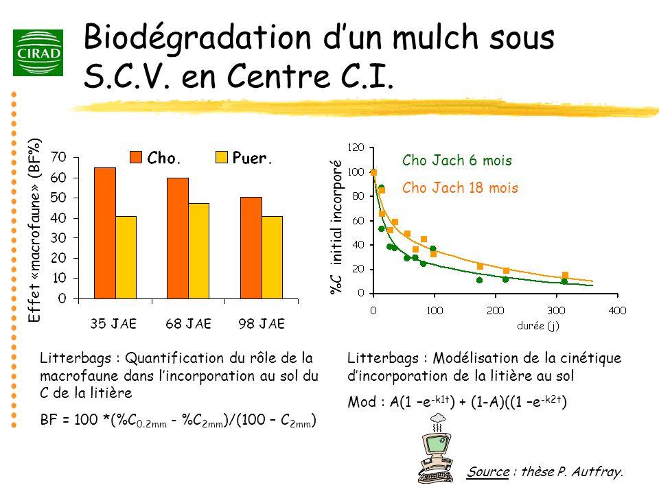 Biodégradation d'un mulch sous S.C.V. en Centre C.I.