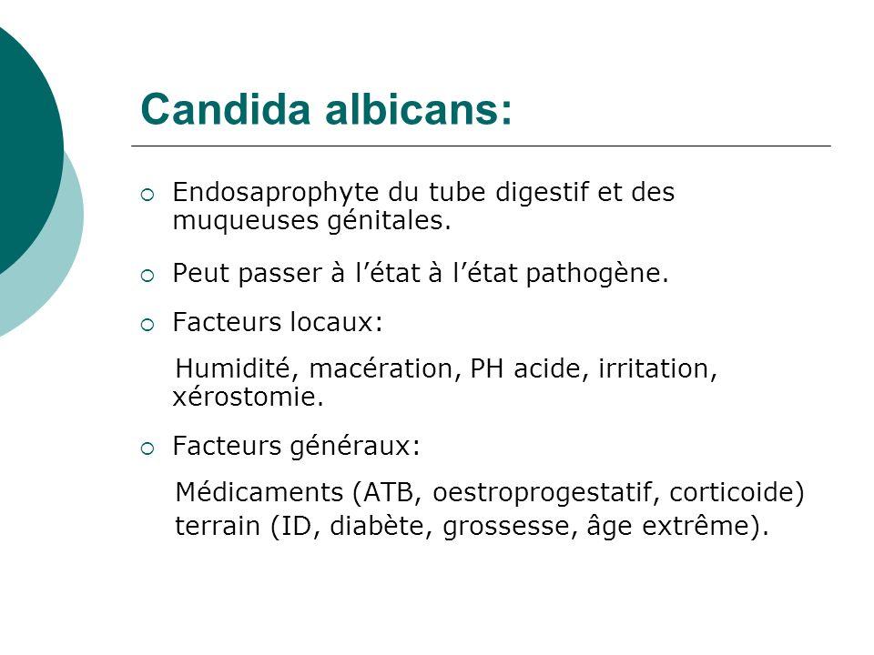Candida albicans: Endosaprophyte du tube digestif et des muqueuses génitales. Peut passer à l'état à l'état pathogène.