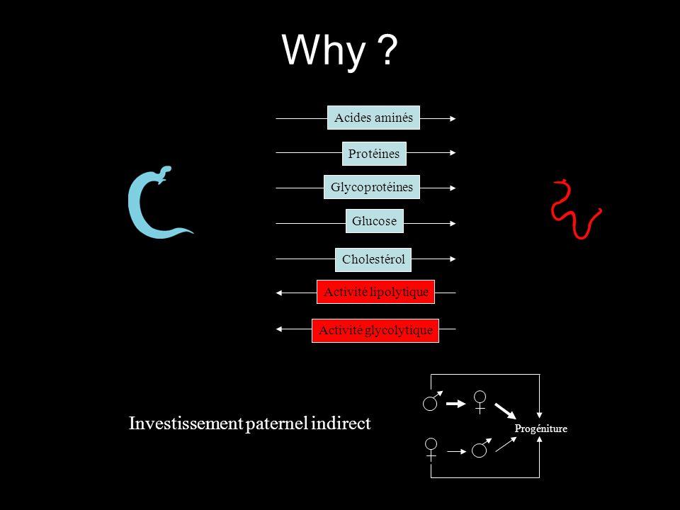 Why Investissement paternel indirect Acides aminés Protéines