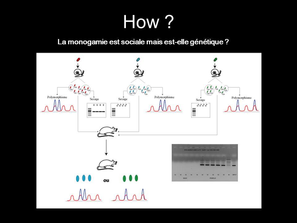How La monogamie est sociale mais est-elle génétique