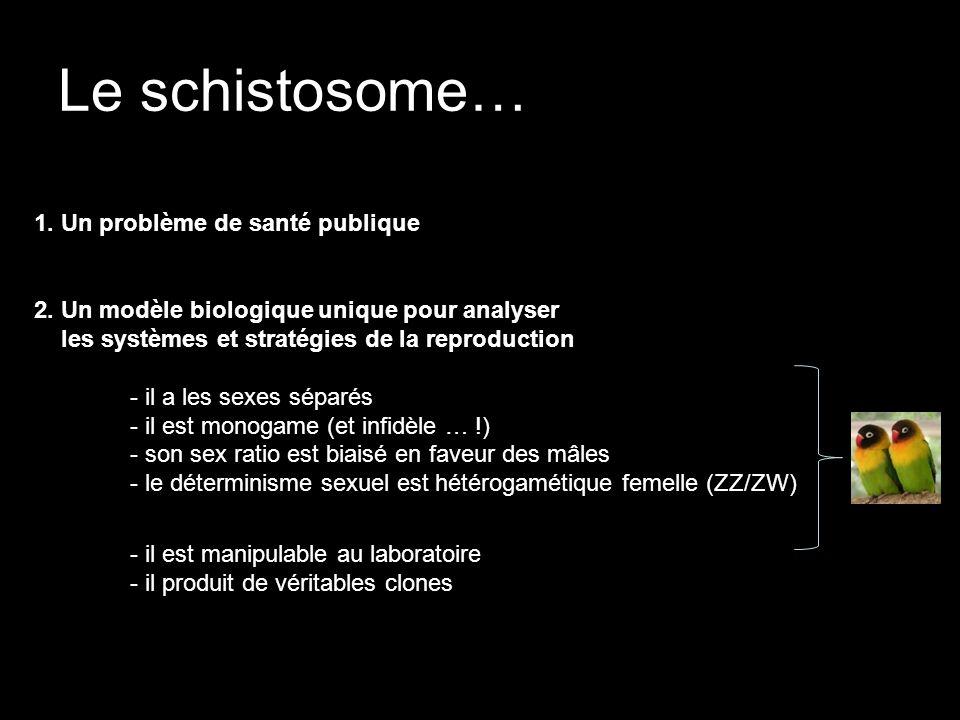 Le schistosome… 1. Un problème de santé publique