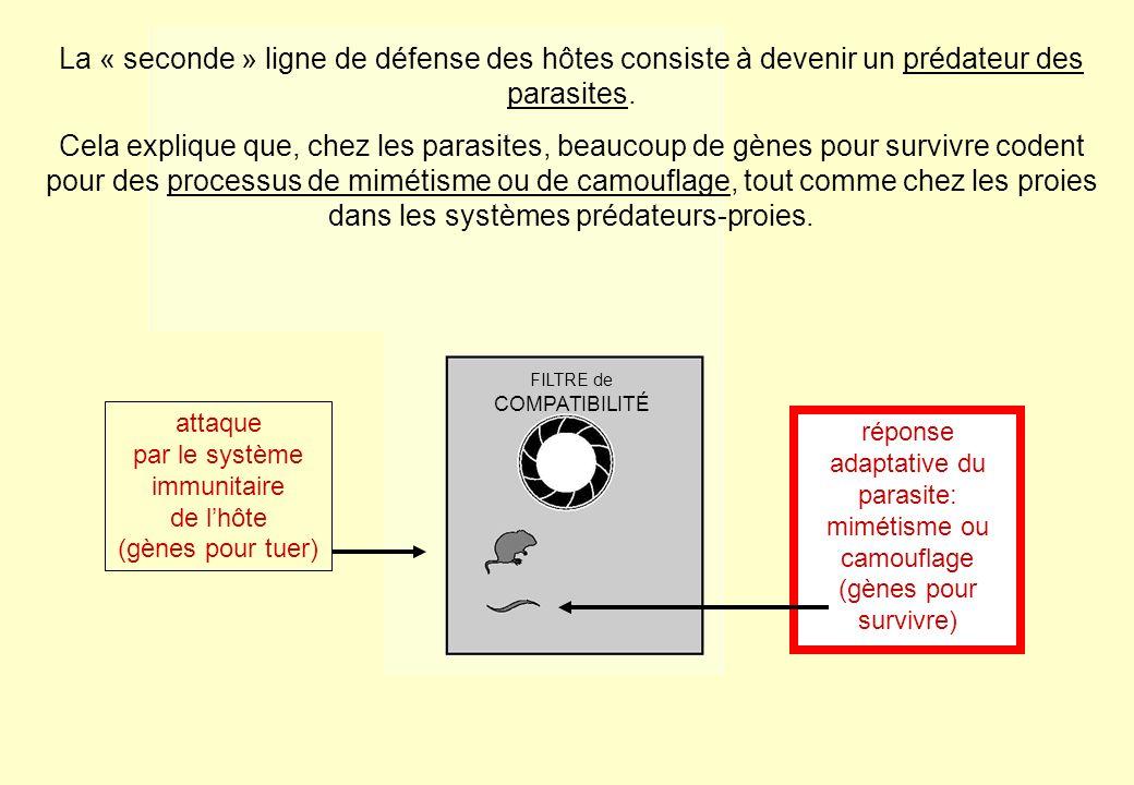 La « seconde » ligne de défense des hôtes consiste à devenir un prédateur des parasites.