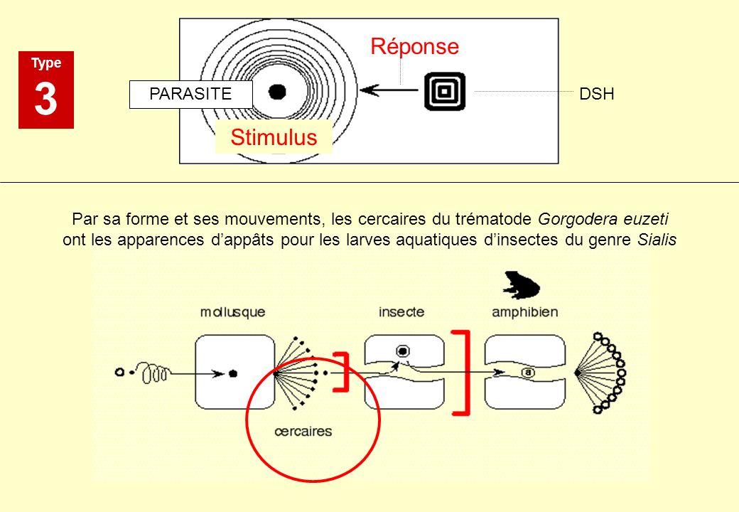 3 Réponse Stimulus PARASITE DSH
