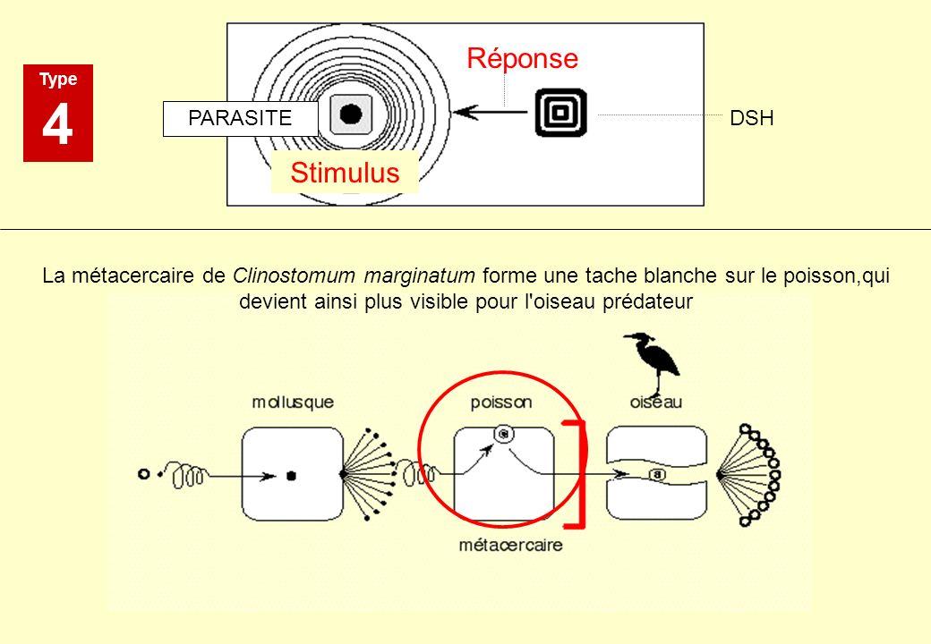 4 Réponse Stimulus PARASITE DSH