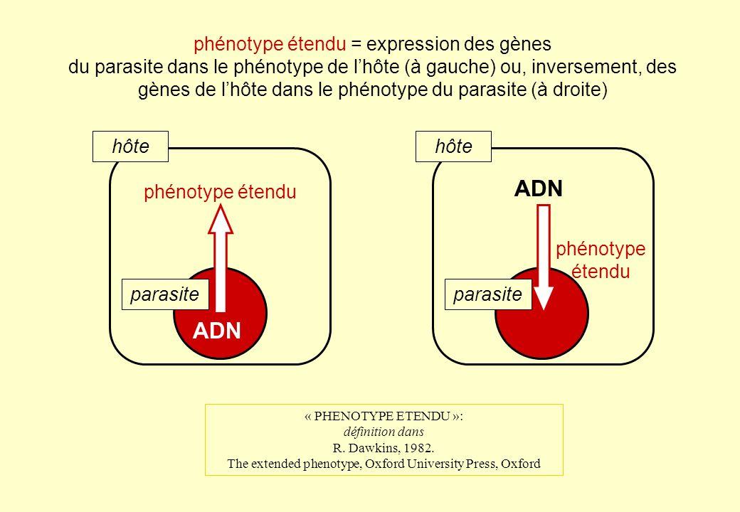 ADN ADN phénotype étendu = expression des gènes