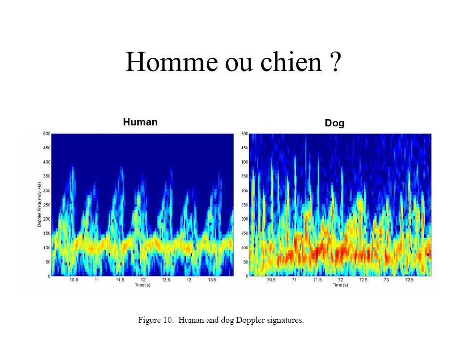 Homme ou chien