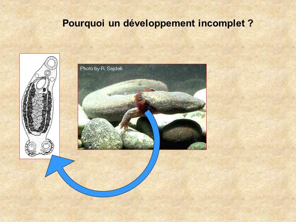 Pourquoi un développement incomplet