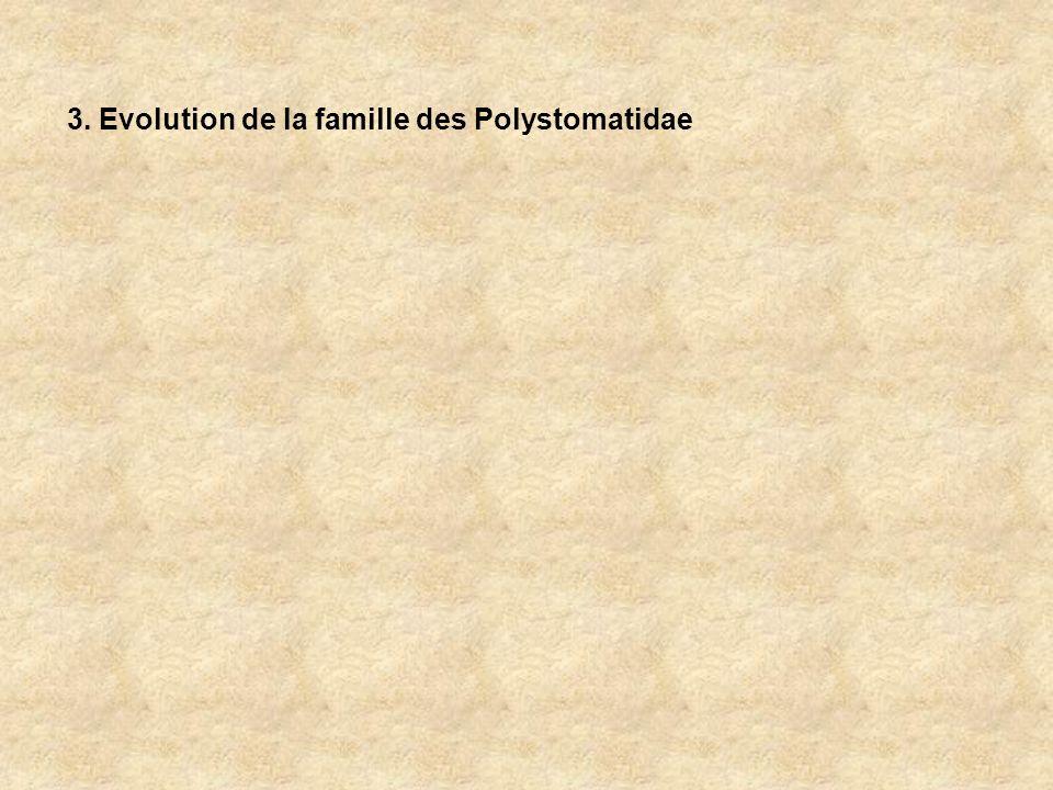 3. Evolution de la famille des Polystomatidae