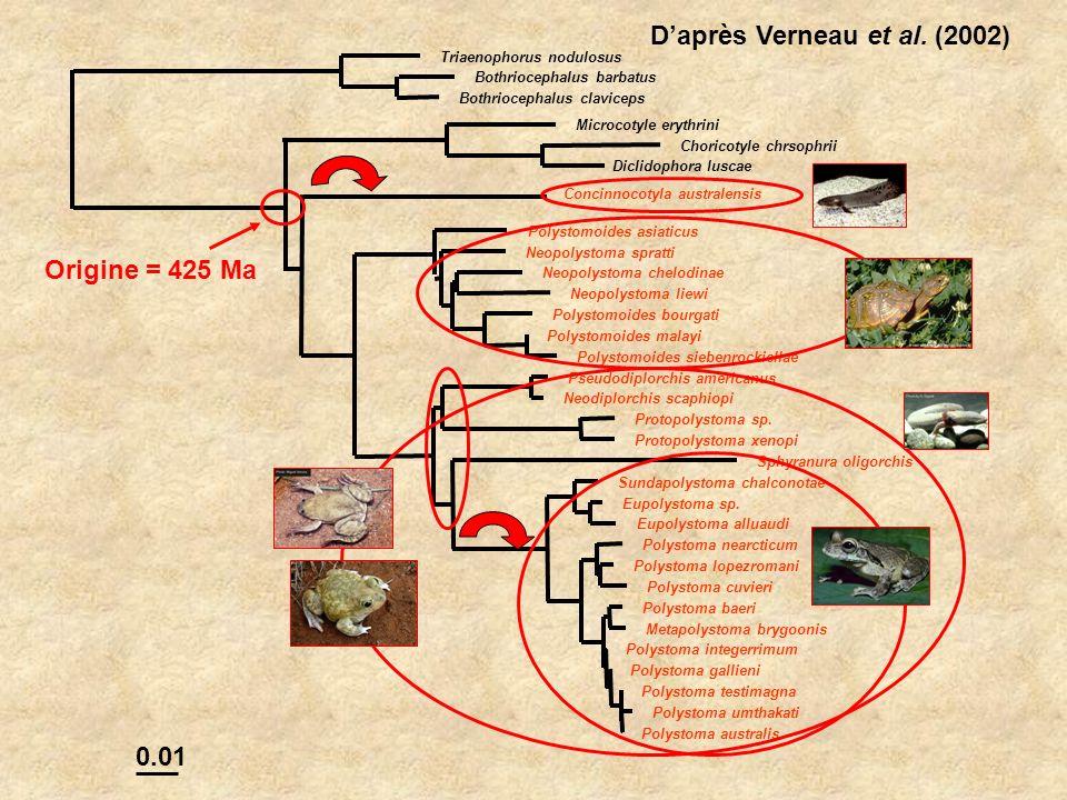 D'après Verneau et al. (2002)
