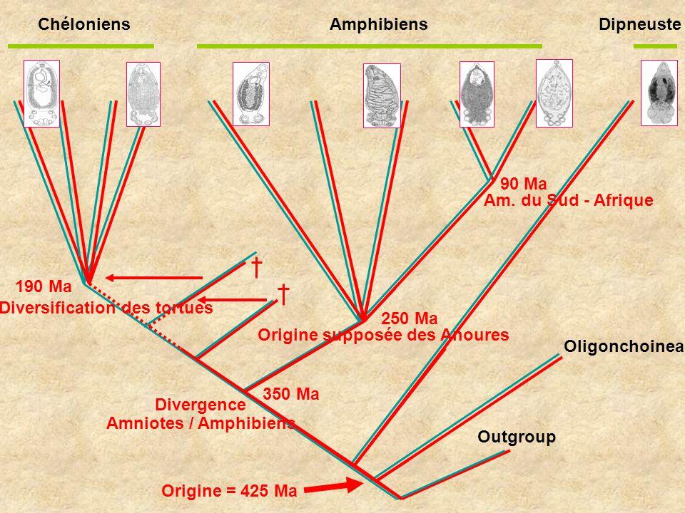Chéloniens Amphibiens Dipneuste