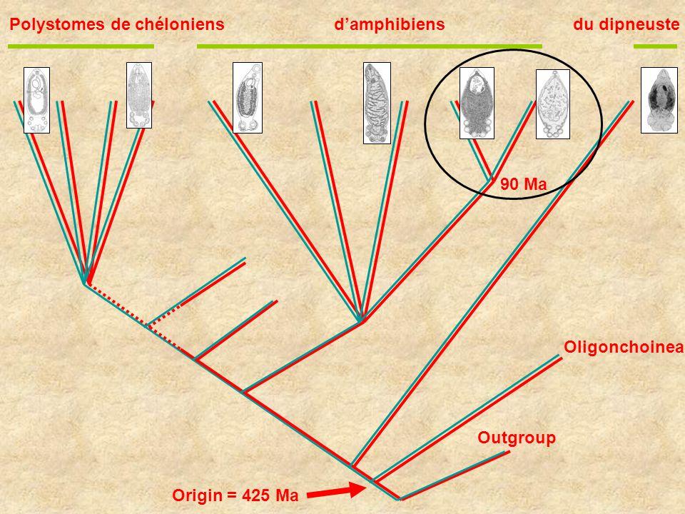 Polystomes de chéloniens d'amphibiens du dipneuste
